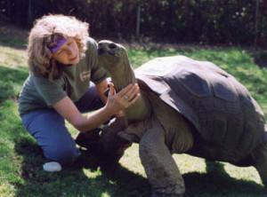 elke-turtle