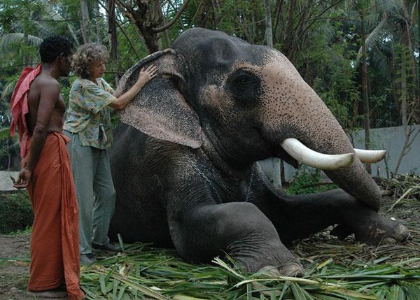 massage-elephant