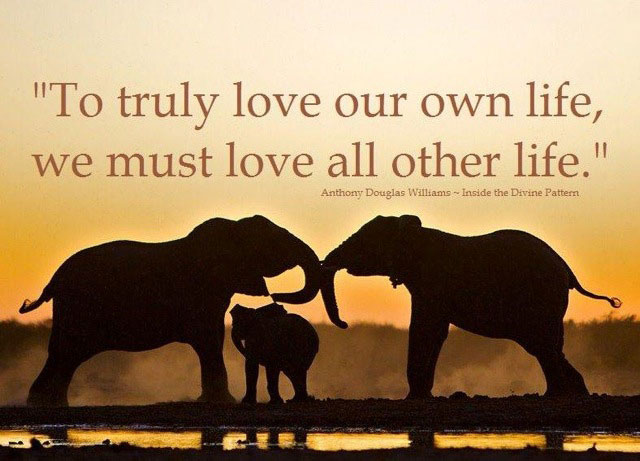 Elephant Quotes Beauteous Quotes